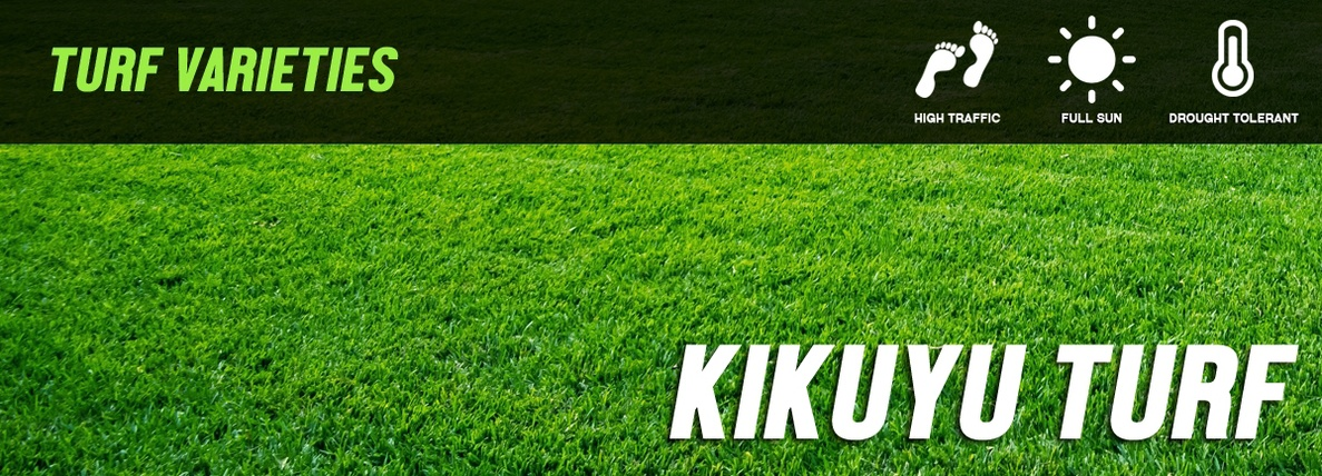 Kikuyu Turf - Lawn Supplies