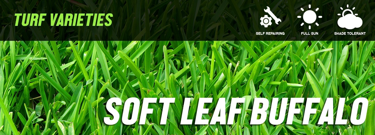 Kings Pride Soft Leaf Buffalo Turf